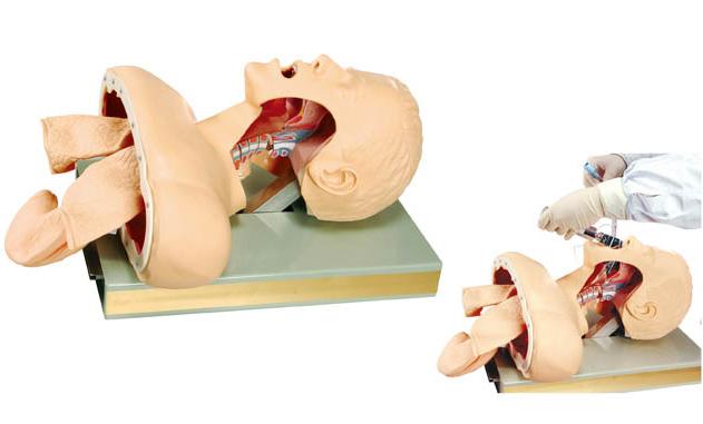 带解剖成人气管插管训练模型